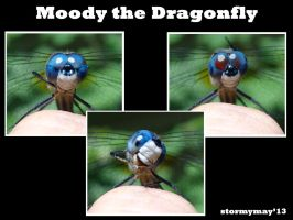 Moody the Dragonfly by stormymay888