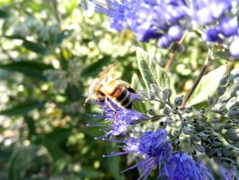 """""""The Bee"""" by ilovelucy365"""