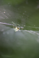 Spider-Web by IDR-DoMiNo