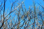Winter Branches by saraeo