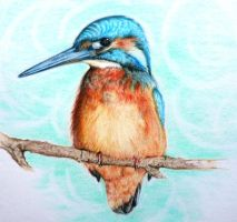 Kingfisher by Trisha-N