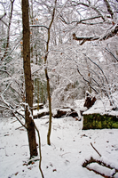 Winter Forest Stock 25 by AreteStock