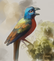 Painted Bunting by BASbird