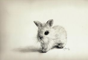 Tiny bunny by Mishice