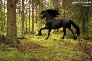 Friesian 1 (used) by JuneButterfly-stock
