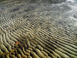 Beach Lines by Daemare