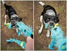 Tug! by ShelleyVPhoto