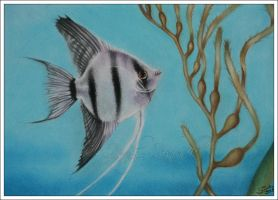 Angelfish by Zindy