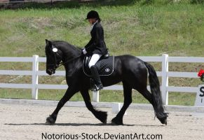 Dressage 004 by Notorious-Stock