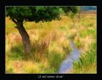 Last of Summer by Maceo-x-