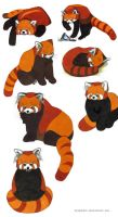Red Pandas by WingChant