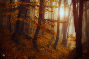 surface of my heart by ildiko-neer