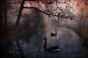 Dark River Swan by IrondoomDesign