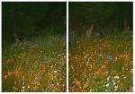 Wild Flowers At Night by Forestina-Fotos