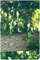 White-breasted Nuthatch by emailartist26