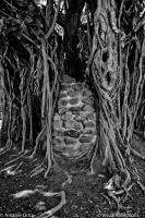Roots of Bricks by VisualReflections