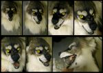 Personal Werewolf mask by Crystumes
