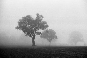 Trees in the Mist by Nigel-Kell