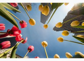 Bugs eye view - Plaza hotel by Tomoji-ized