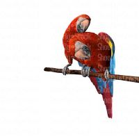 2 Red Macaws Preening - Stock by Shoofly-Stock