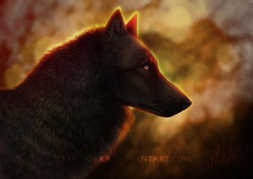 Black wolf by t1sk1jukka