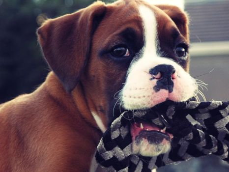 Bruno the Puppy. by DTCT