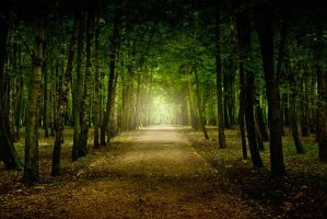 Forest road by posix2000