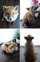 Red Fox Cub Lifesize Mount SOLD by DeerfishTaxidermy