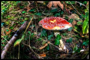 Flyagaric by Megglles
