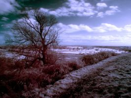 View From Hanbury by Spikey-T