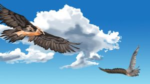 Bearded Vultures by Mercury24