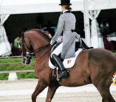 Grandprix Dressage by SteflynPhotography