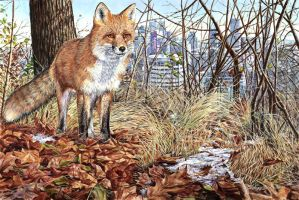 Roux-Novembre  November Fox by JocelyneBouchard