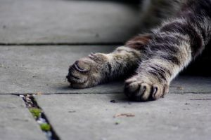 Idle Paws... by Eric-Casper