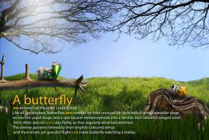 butterfly by SOOO