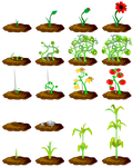 Farm Plants High Res by magewish4