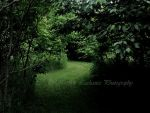 The Trail by MoonlightMysteria