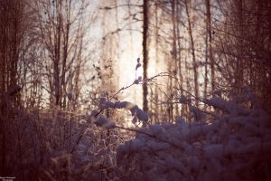 Cold days in Finland 2 by jsanna