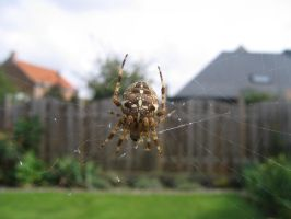 Spider 21 by carinaD-stock