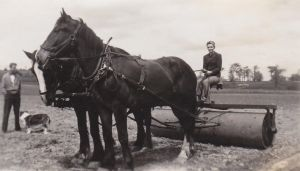 Horse-drawn land roller by Ripplin
