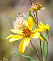Summer Butterfly by mjohanson