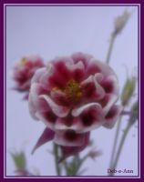 Columbine 107 by Deb-e-ann