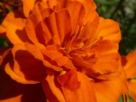Orange by Coup22