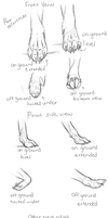Paw Studies by Silverwuff