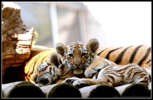 Napping by AF--Photography