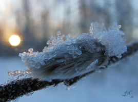Wintry Catkin by JoannaMoory