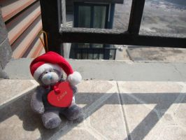 Christmas bear enjoying the sun by Laura-in-china
