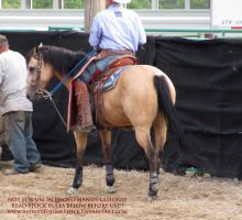 Rodeo-12 by AstriexEquineStock
