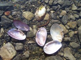 Shells under water 4 by Hermit-stock