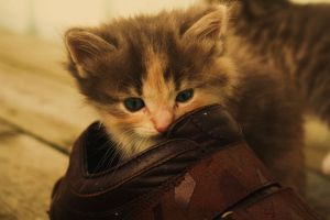 Kitty+Shoes by Diffethan
